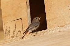 Tierfotografie – oder mein erster tweet